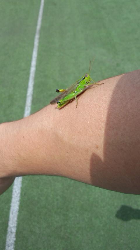 2013Jrテニスキャンプ4